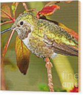 Broad Tailed Hummingbird Wood Print