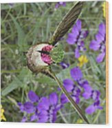 Broad-tailed Hummingbird - Phone Case Wood Print by Gregory Scott