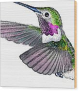 Broad-tailed Hummingbird Wood Print
