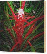 Bromelia Balansae Wood Print