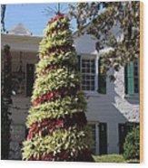 Bromelia Christmas Tree Wood Print