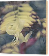 Bromeliaceae - Alcantarea Geniculata Wood Print