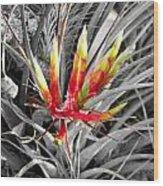 Bromeliad 1 Wood Print