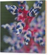Bromeliad - Aechmia Dichlamydea - Guzmania Lingulata Wood Print