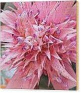 Bromeliad Close Up Pink Wood Print