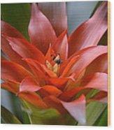 Bromeliad I Wood Print