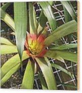 Bromeliad In Barbados Wood Print