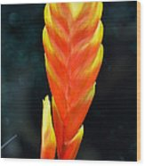 Bromeliad Red And Yellow Wood Print