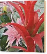 Bromeliad Red Pink Brick Wood Print