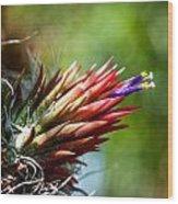 Bromeliad Strica Wood Print