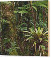Bromeliads Of The Clouds Wood Print