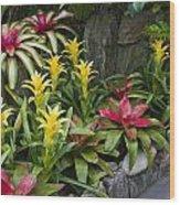 Bromeliads Wood Print