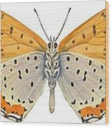 Bronze Copper Butterfly Wood Print