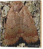 Bronze Moth Wood Print