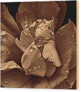 Bronze Ruffled Parrot Tulip Flower Wood Print