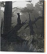 Brooding Forest Wood Print