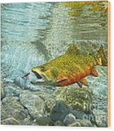 Brook Trout And Artificial Fly Wood Print