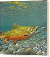 Brook Trout And Coachman Wet Fly Wood Print