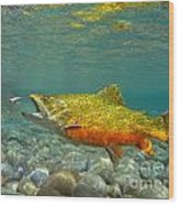 Brook Trout And Royal Coachman Wood Print