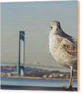 Brooklyn Seagull Wood Print