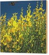 Broom And Carpenter Bee Wood Print