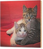 Brothers Kittens Wood Print