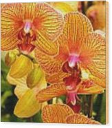 Smiling Brown And Pink Orchids Wood Print