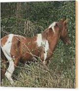 Brown And White Horse Standing In A Forest Wood Print