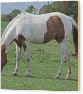 Brown And White Painted Horse Wood Print