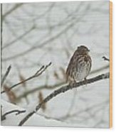 Brown And White Speckled Bird On Snowy Limb Wood Print