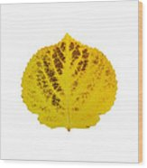 Brown And Yellow Aspen Leaf 3 Wood Print