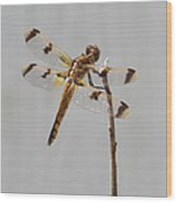 Brown And Yellow Dragonfly On A Twig Wood Print