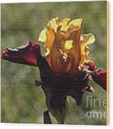 Brown And Yellow Iris Wood Print