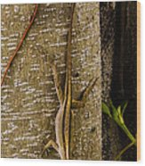 Brown Anole Lizard In Florida Wood Print