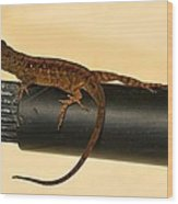 Brown Anole On Pipe Wood Print