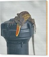 Brown Anole With Dewlap Wood Print