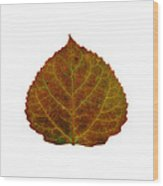Brown Aspen Leaf 2 Wood Print