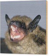 Brown Bat Eptesicus Fuscus Wood Print