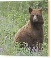 Canadian Bear Wood Print