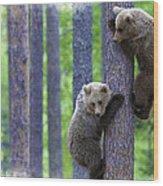 Brown Bear Climbing Lesson Wood Print