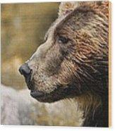 Brown Bear Golden Morning Wood Print