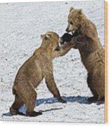 Brown Bear Ursus Arctos Cubs Play Wood Print