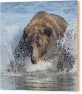 Brown Bear, Ursus Arctos, Fishing Wood Print