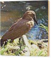 Brown Bird Wood Print