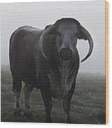 Brown Bull Wood Print