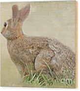 Brown Bunny Wood Print
