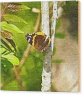 Brown Butterfly 2 Wood Print
