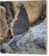 Brown Butterfly Cuyahoga Valley Wood Print