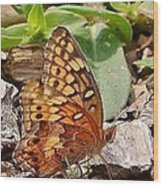 Brown Butterfly Wood Print