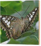 Brown Clipper Wood Print